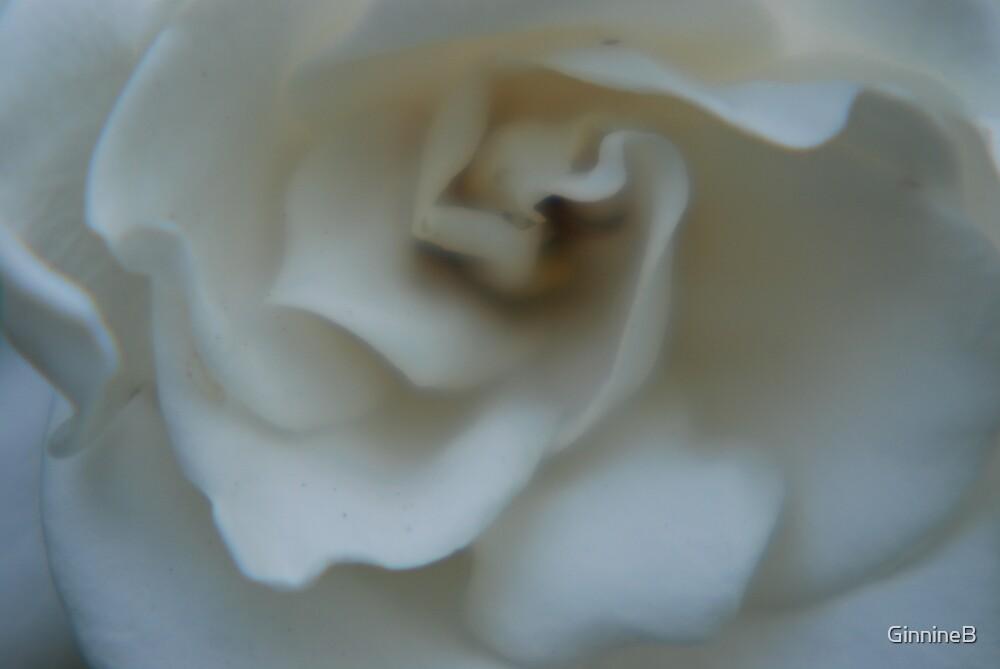 White flower by GinnineB