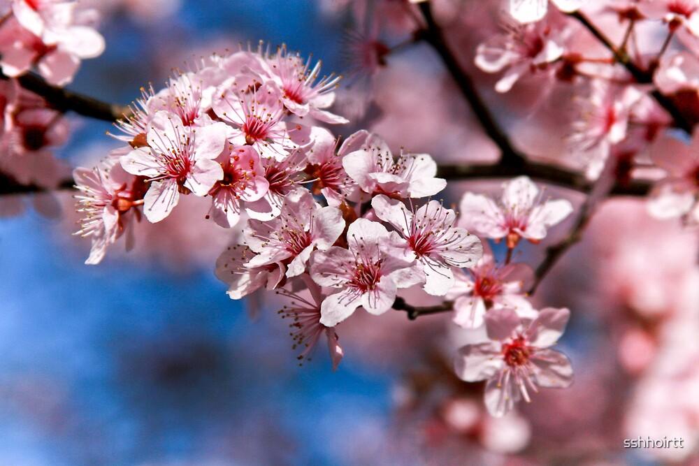 Pink Tree Flower by sshhoirtt