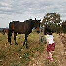 Unexpected Encounter in North Adelaide by Magda Vacariu