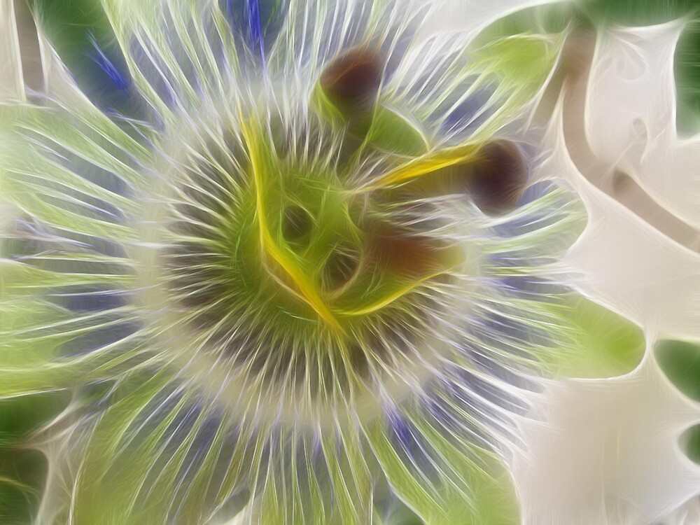 passion flower by alaskaman53