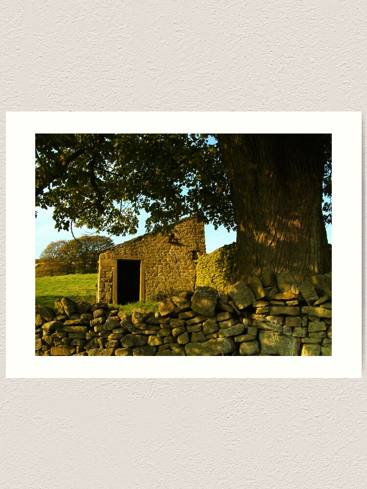 Alternate view of Yorkshire Dales dry-stone wall and tree Art Print