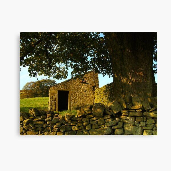 Yorkshire Dales dry-stone wall and tree Canvas Print