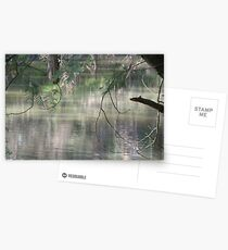 Spring Reflections Postcards