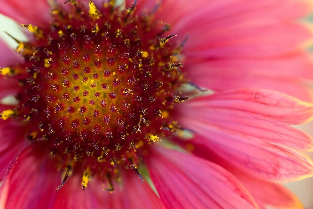 Pollen by Donny  Hahn
