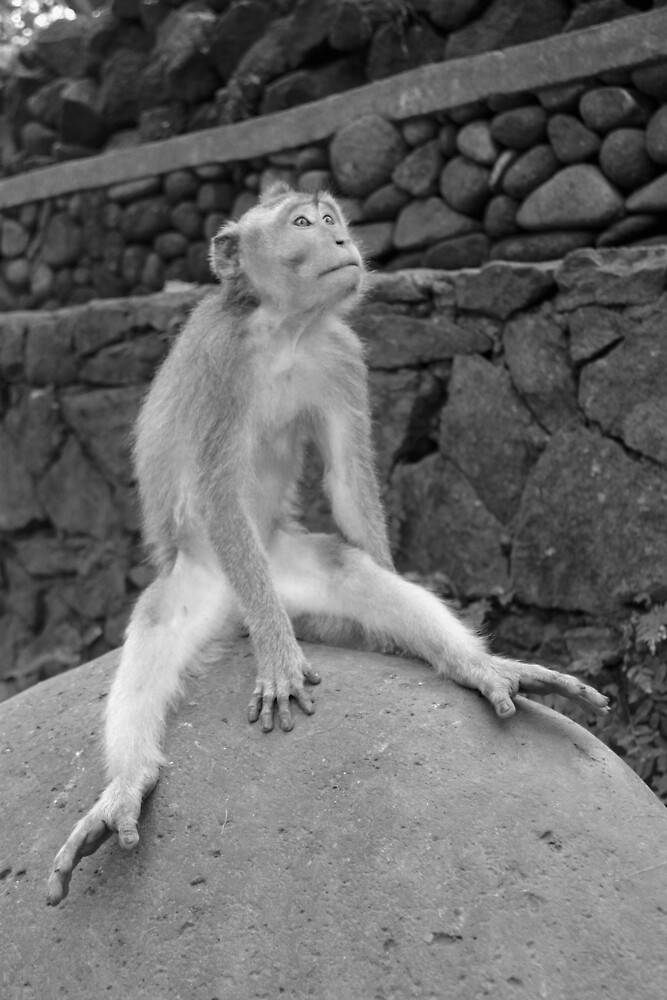 Monkey, Ubud.  by Michael Stocks