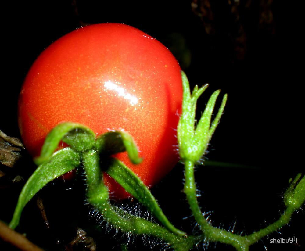 Tomato by shelbu94