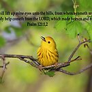 Yellow Warbler with Psalm 121:1, 2  by hummingbirds
