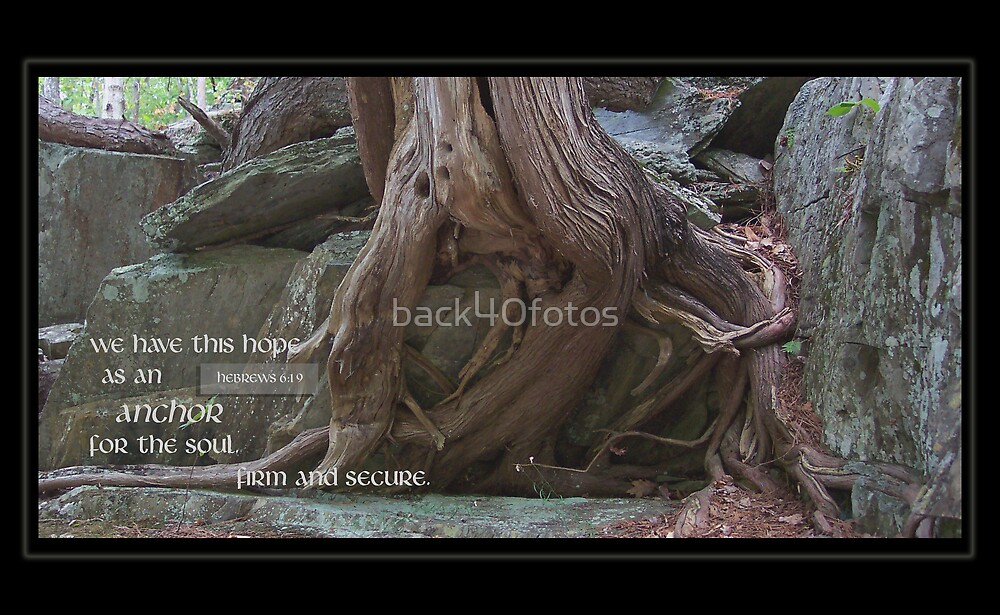 Roots by back40fotos