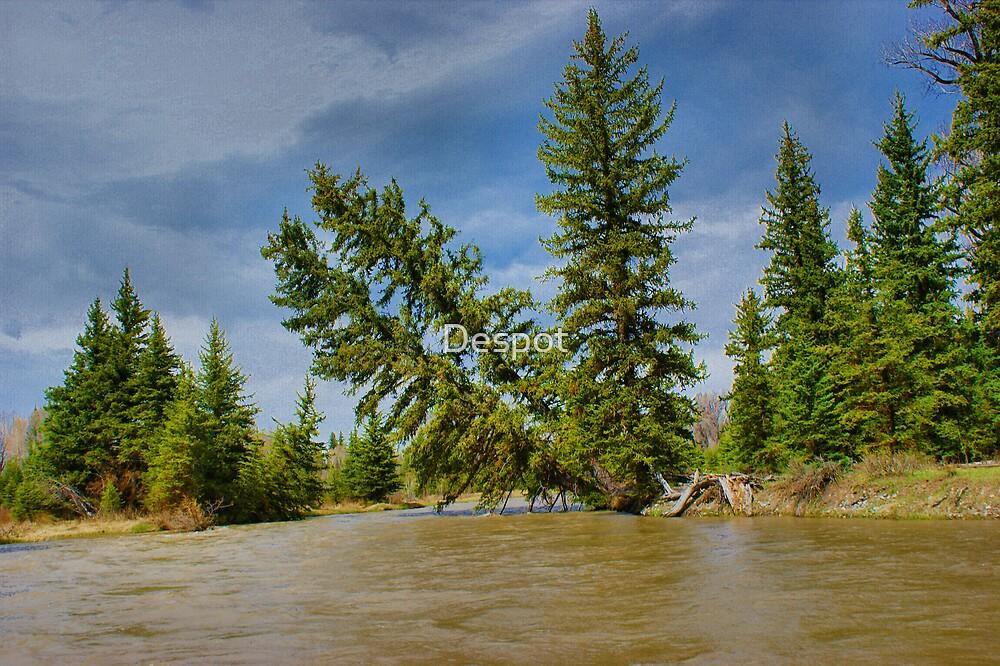 Upper Snake River by Despot