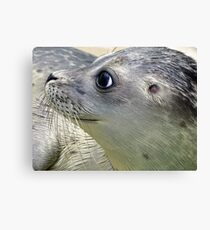 Cute spotted fur seal Canvas Print