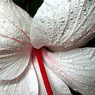 Raining .... by Ryan Carter