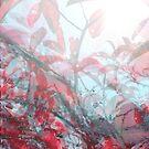 Rhapsody in Red by sethworx