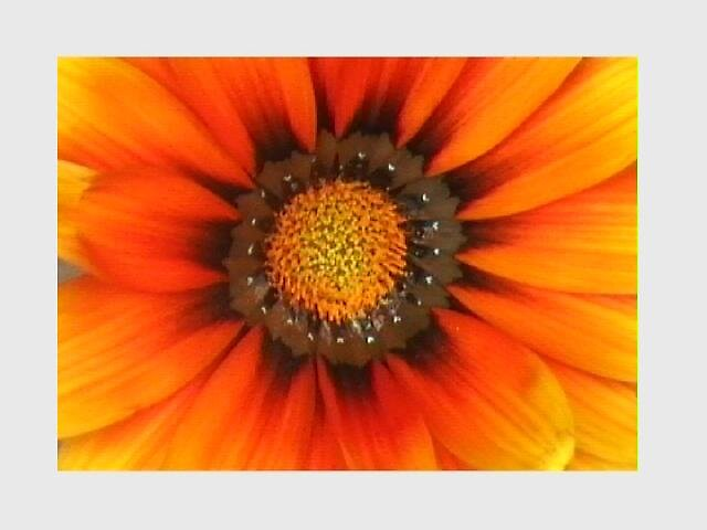 Flower 27 by Ratbag