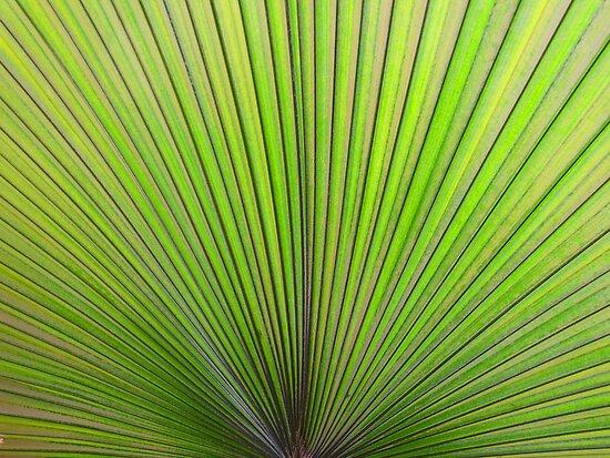 Palm Leaf by A90Six