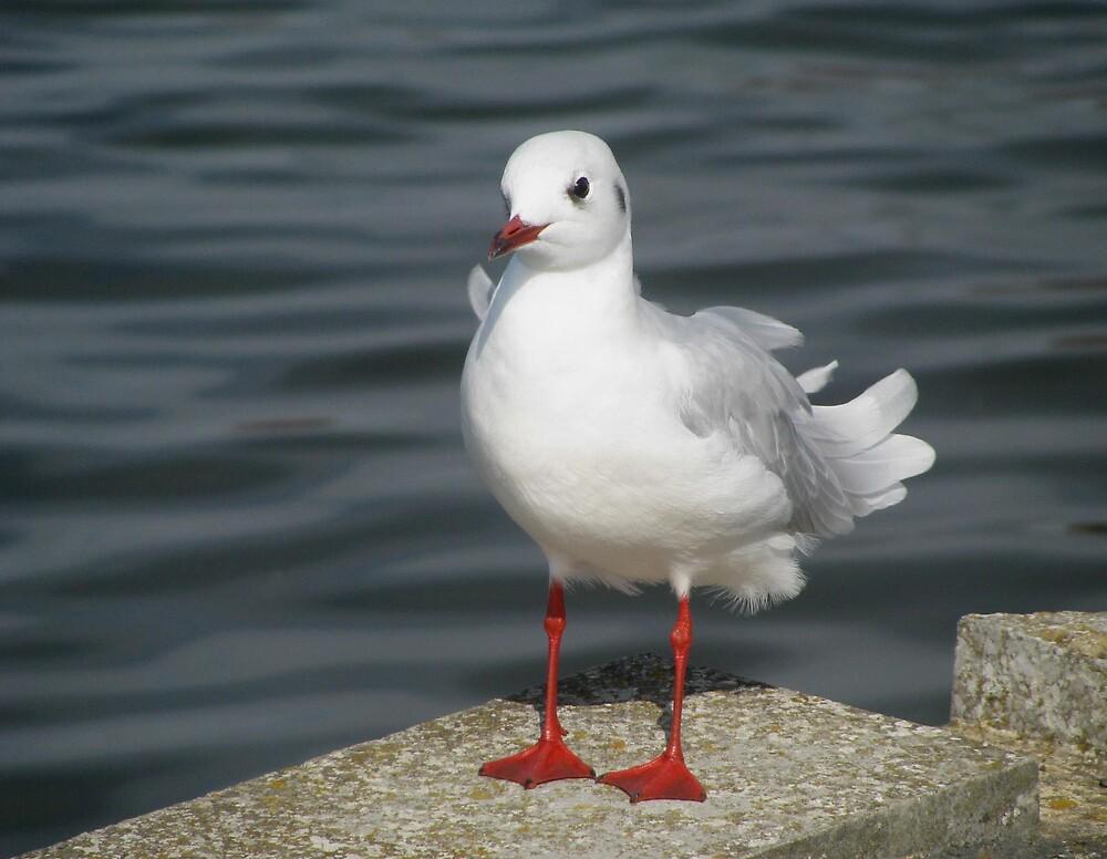 """""""Hello Mr. Seagull"""" by Caroline Anderson"""