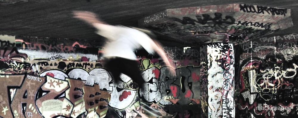 Skate by mackimages