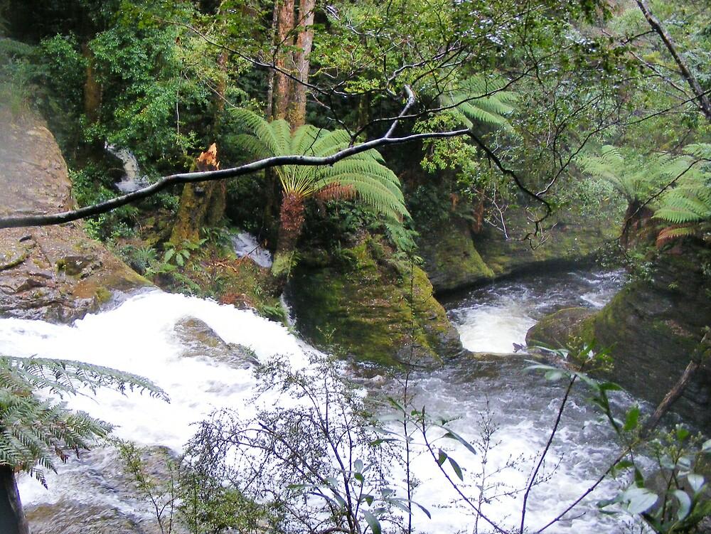 gushing down from Liffey Falls, Tasmania by gaylene