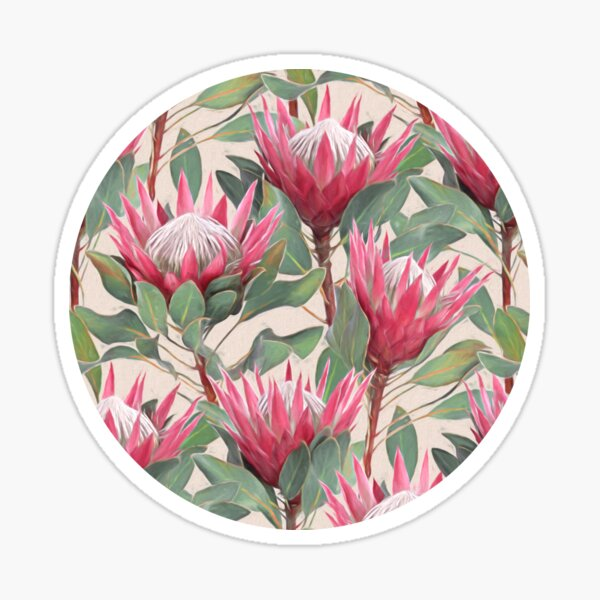 Painted King Proteas on Cream  Sticker