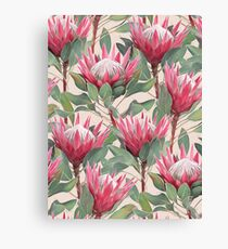 Painted King Proteas on Cream  Canvas Print
