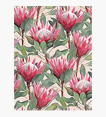 Painted King Proteas on Cream  Photographic Print