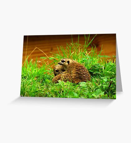 MeerKat #4 Greeting Card