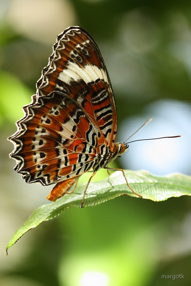 Orange Lacewing Butterfly by margotk