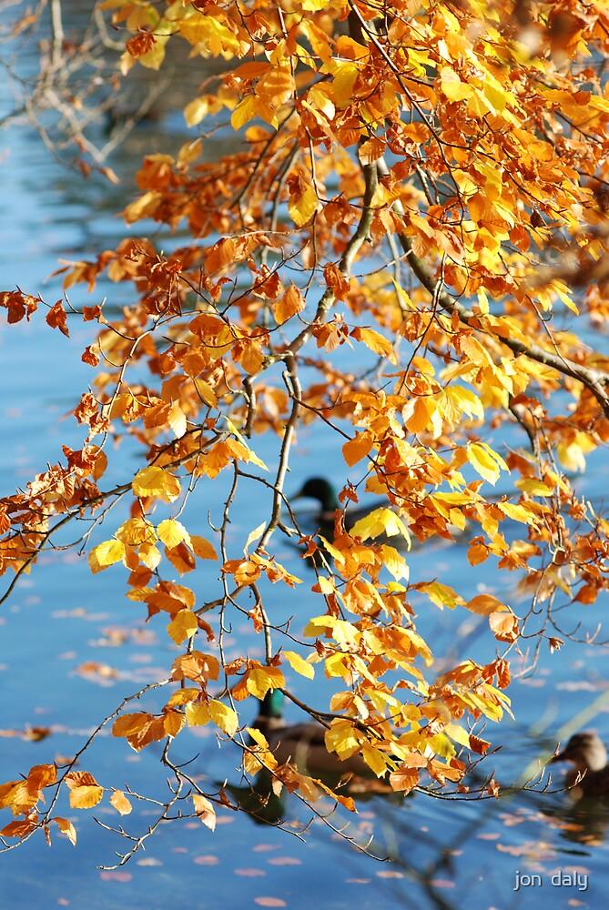 autumn 2 by jon  daly