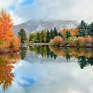 Colorado Autumn Splendor - Aspen by Gregory Ballos