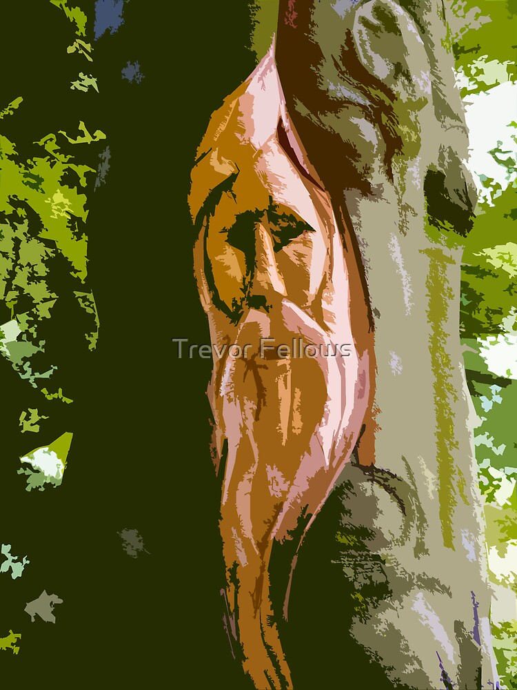 Old Man Of The Woods by Trevor Fellows