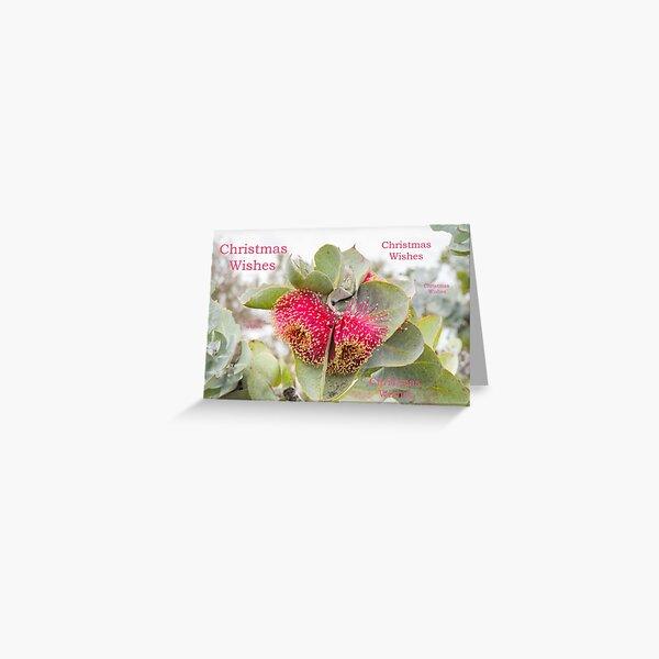 Eucalyptus rhodanthe Christmas card Greeting Card