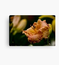 """Inherited Wealth"" Daylily Canvas Print"