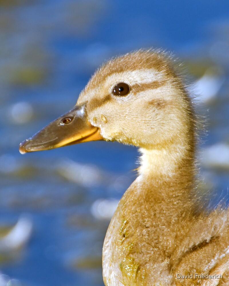 Yellow Duckie by David Friederich