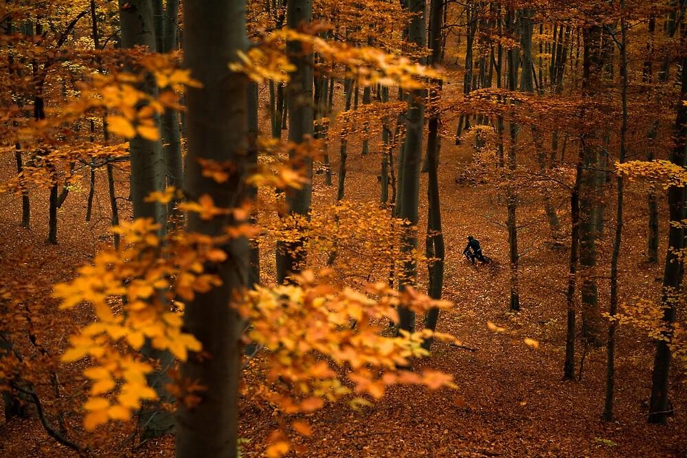 Autumn ride by Andrej Grznár