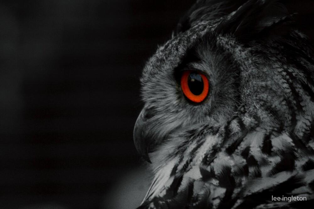 Black and white owl by lee ingleton