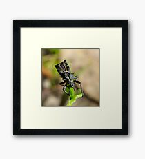 If Mad Max made insects Framed Print
