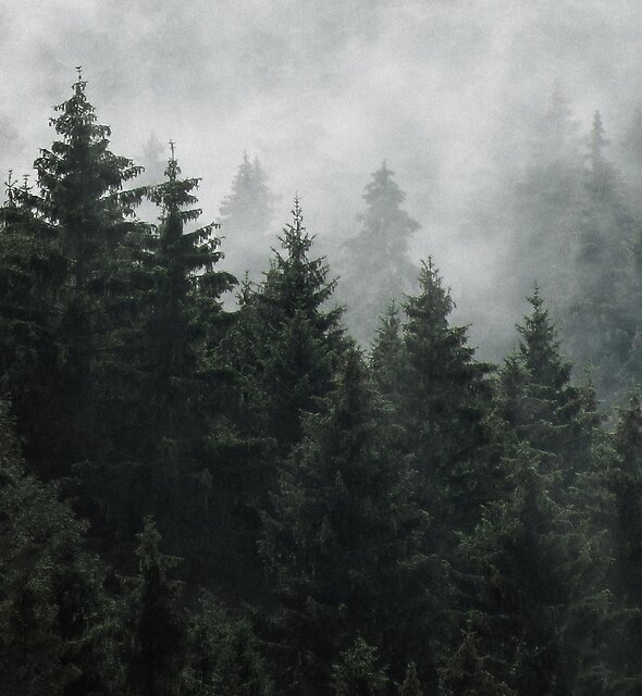Waiting For by Tordis Kayma