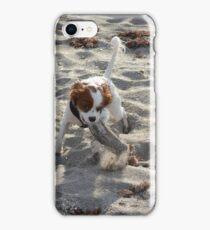 cavalier king charles spaniel on beach iPhone Case/Skin