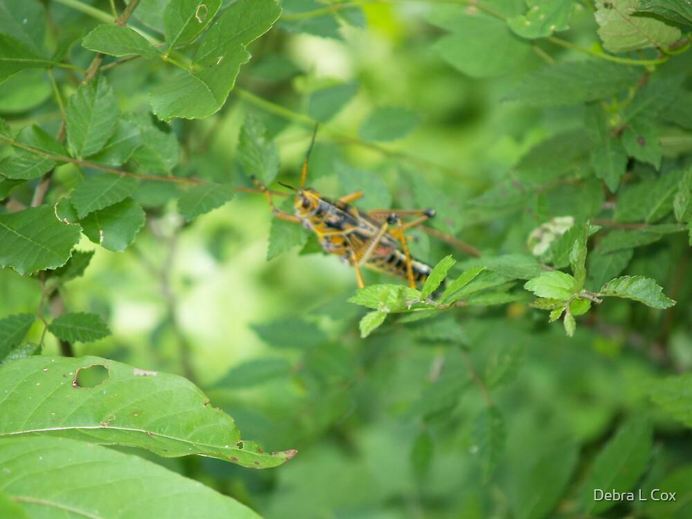 Grasshopper Green by Debra L Cox