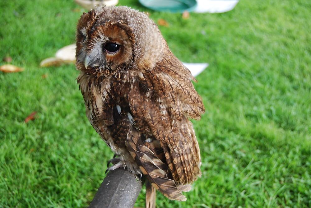 little cute owl by ampwizbit
