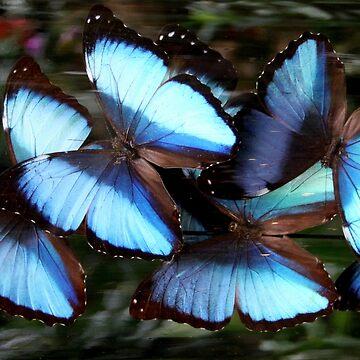 Peleides Blue Morpho Art by Jokus