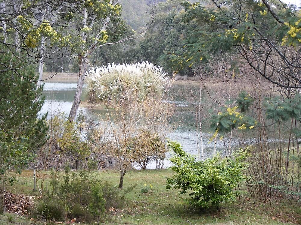 pampas grass island at Golden Valley, Tasmania by gaylene