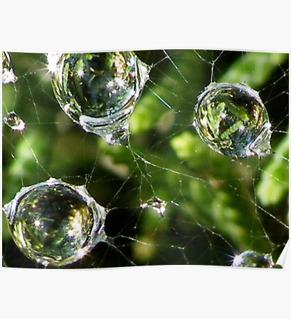 Raindrops Keep Falling on my Web!! Poster
