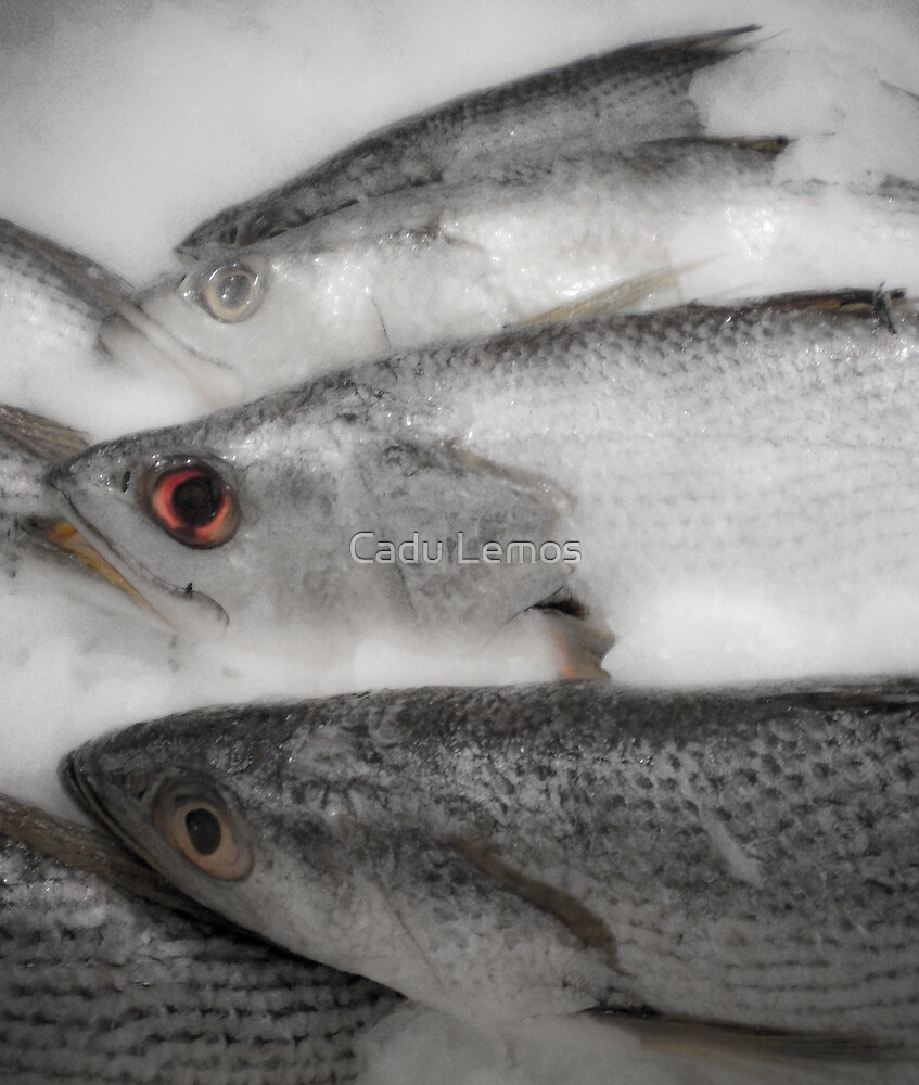 fisheye 2 by Cadu Lemos