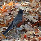 Robin In The Fall by RickDavis