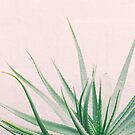 Minimal Aloe on pink background - Aloe Photography by lightwanderer