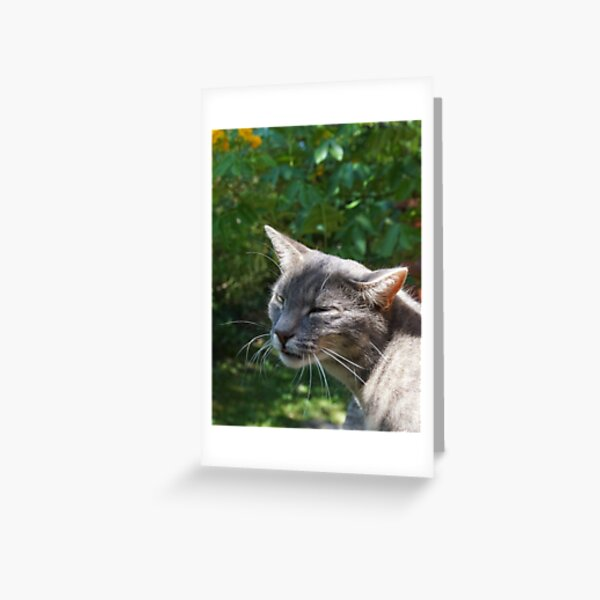 What 39 S Greeting Cards Redbubble