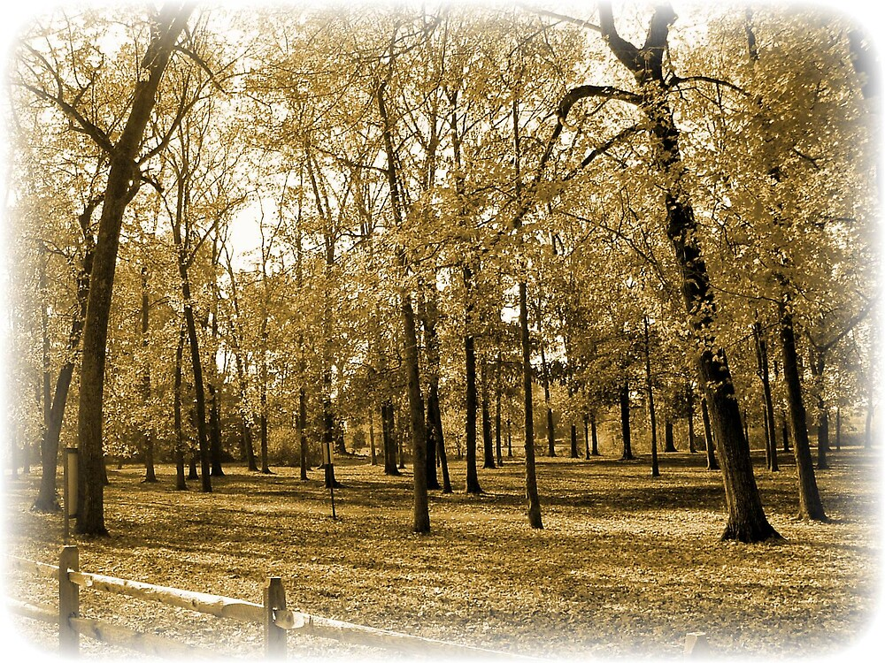 Bowers Park by Mindy Miller
