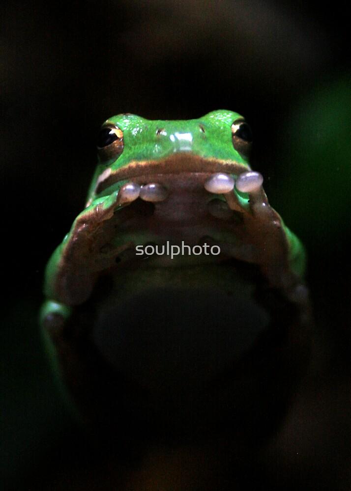 Praying Frog by soulphoto