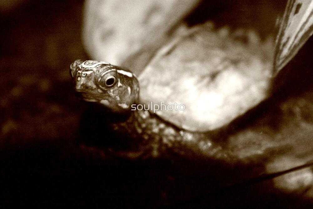 Turtle Club by soulphoto