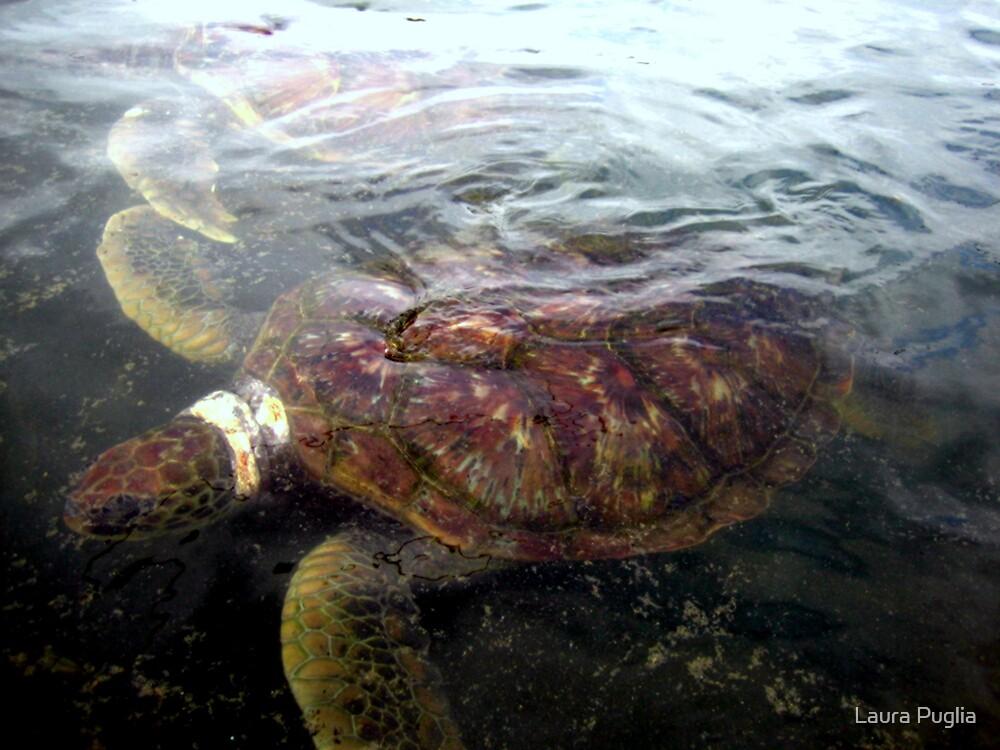 Sea Turtle by Laura Puglia
